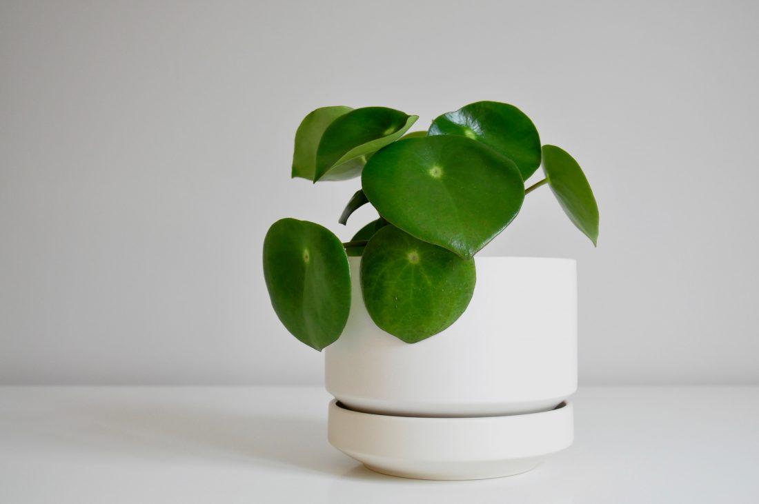 Blumentopf Modern keramik blumentopf richard lindh für arabia achtgrad